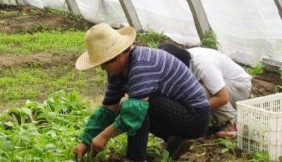 فرص عمل في الفلاحة في كندا في قطاع المستنبتات و مزارع العنب 2020